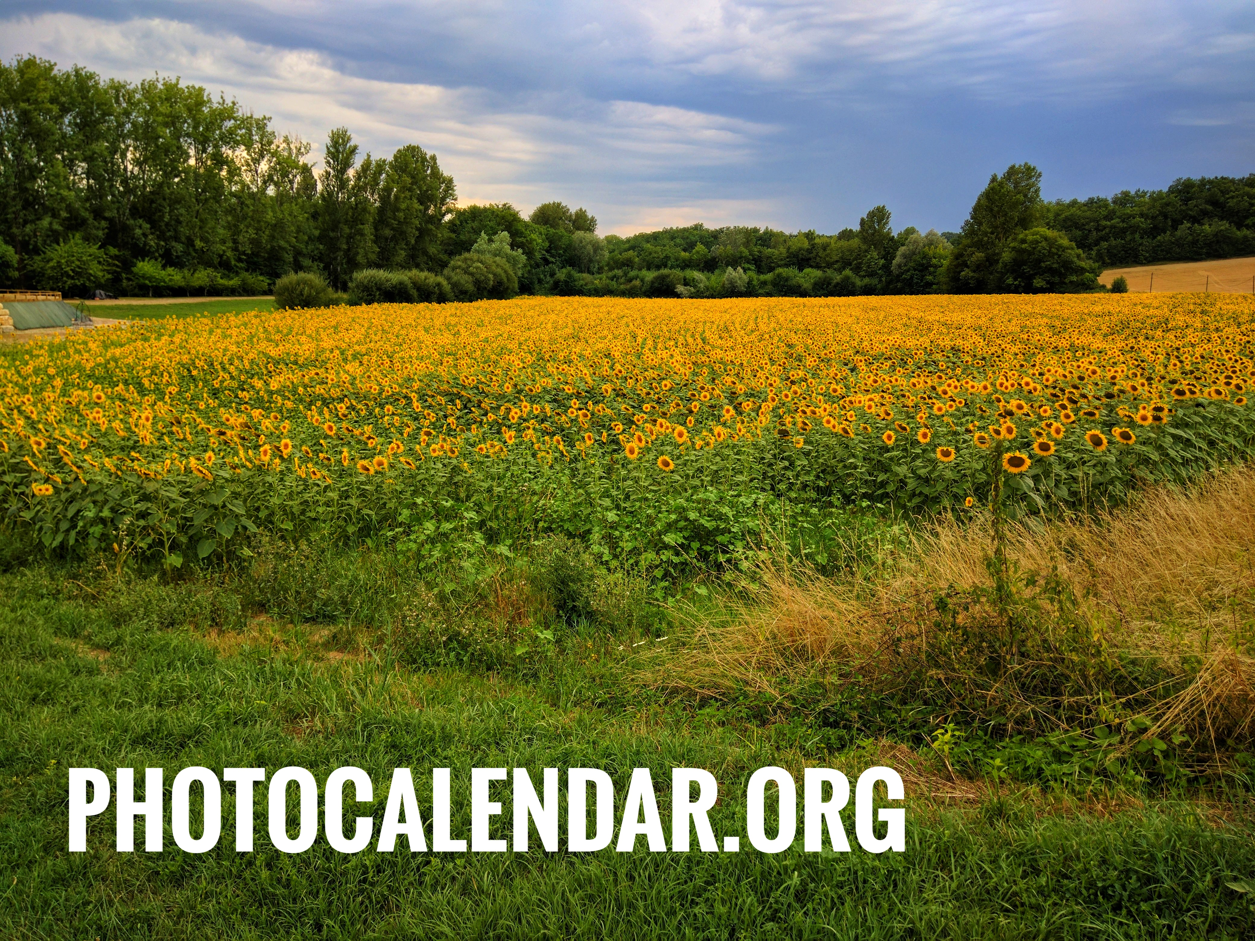 PhotoCalendar.org, domain name for sale
